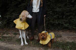 Best Dog Raincoats