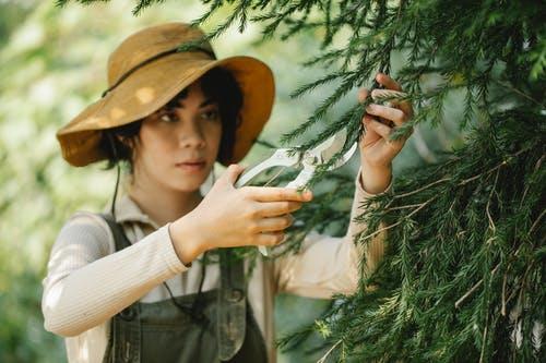 Tree services company