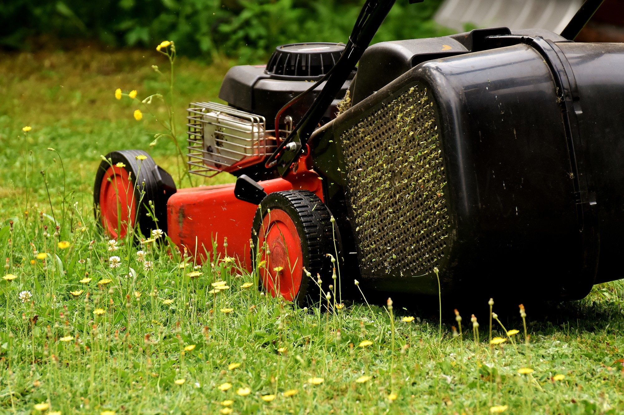 5 Common Lawn Mowing Mistakes and How to Avoid Them