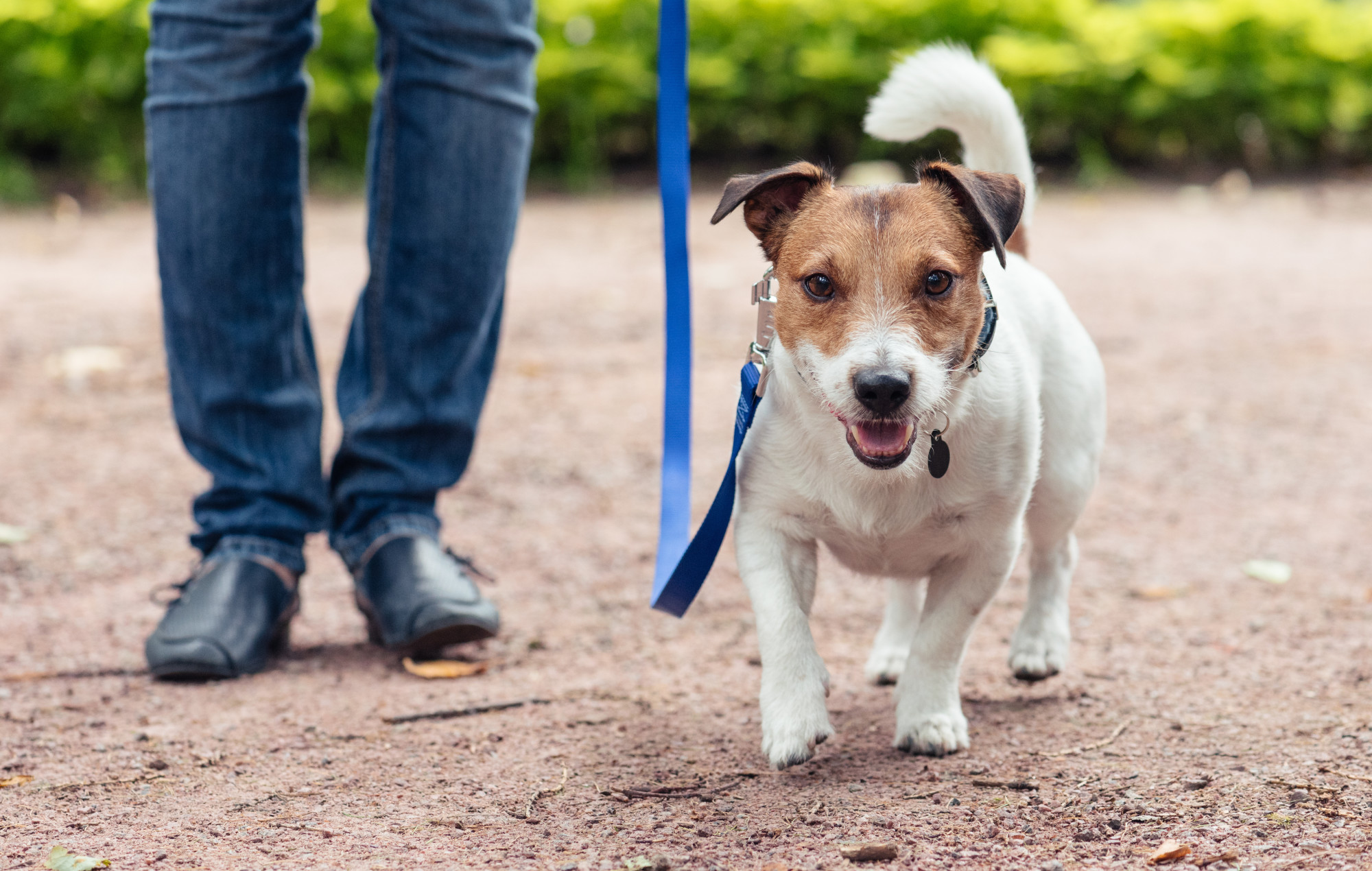 Perfect For Your Pooch: How to Be a Great, Responsible Dog Owner