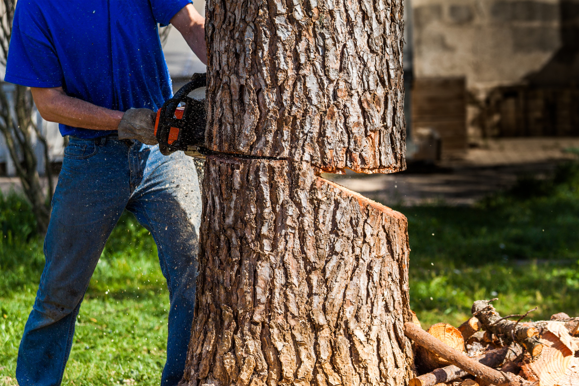 5 Reasons to Avoid DIY Tree Removal