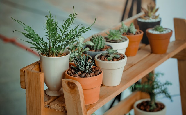 List of most high maintenance indoor plants that are worth the effort