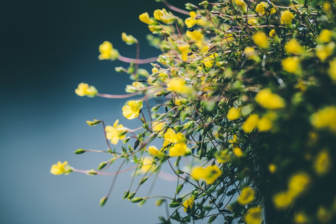 Outdoor Festoon Lights: 7 Picks To Make Your Garden Sparkle