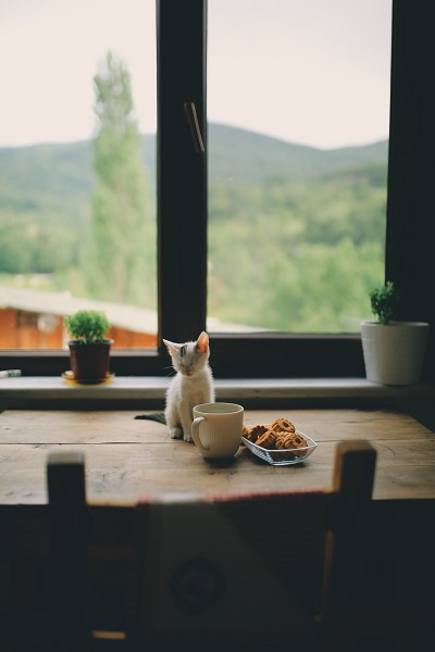 Healthy Food For Your Cat